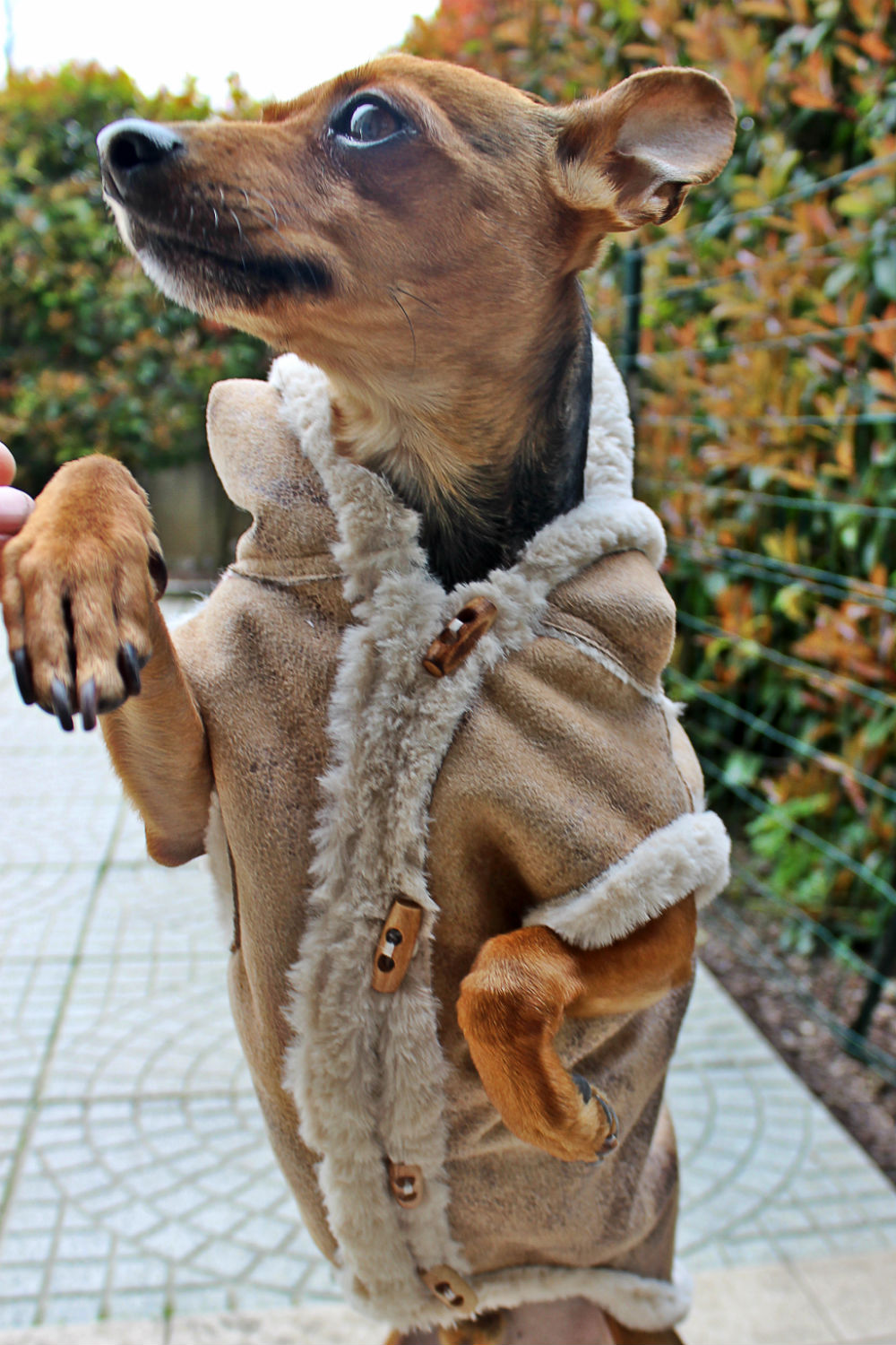 ALWAYS-MINE-MILANO-VESTITI-LUXURY-PER-CANI-FASHION-DOGS4