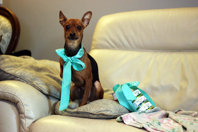 bobby fashion dog ed i prodotti pet food di schesir