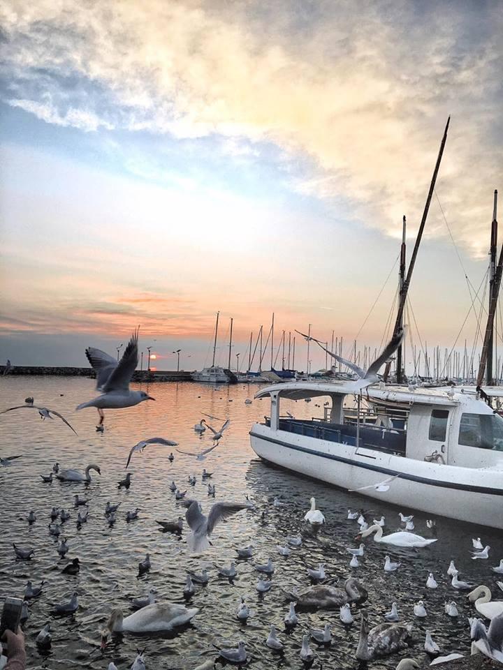 losanna barche gabbiani