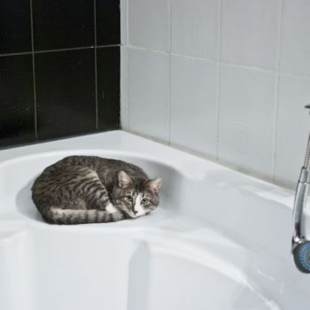 doccia_gatto