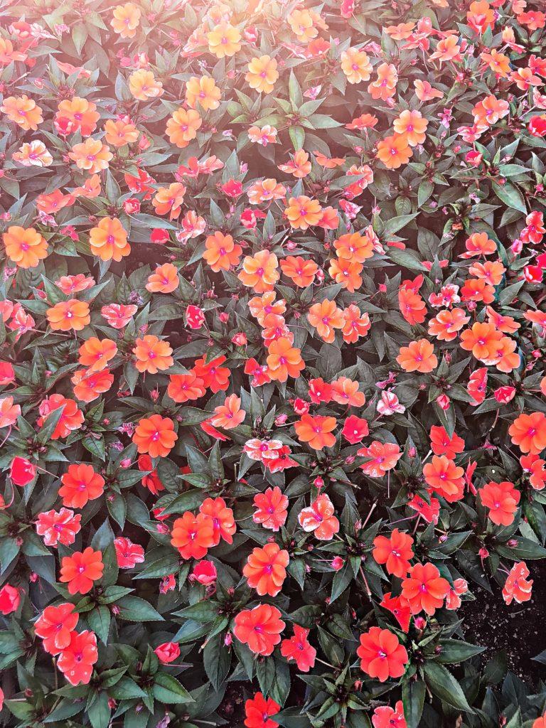 fiori_gardaland