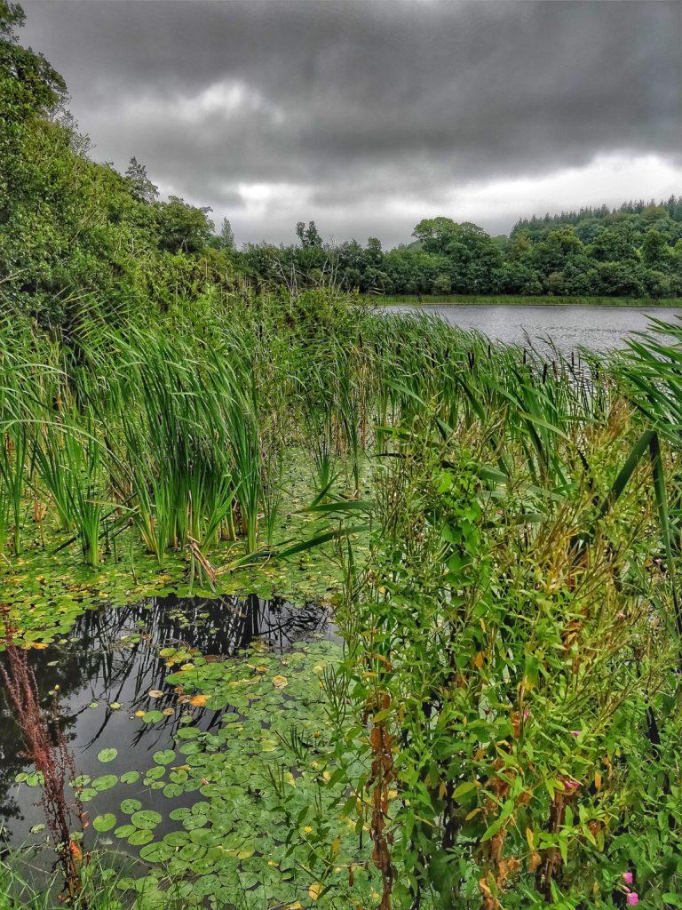 Irlanda del sud castello di blarney