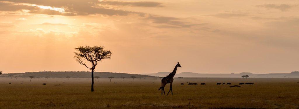 destinazioni_viaggi_safari
