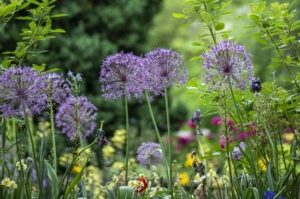 home_deal_giardino