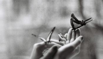 bullismo_farfalla