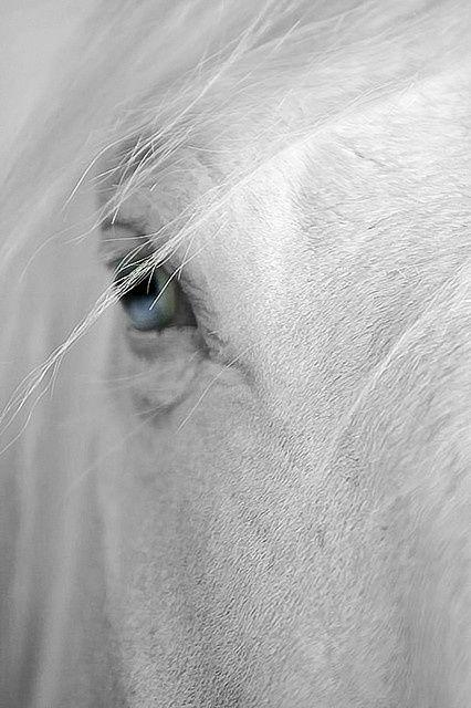 cavallo_occhio_azzurro